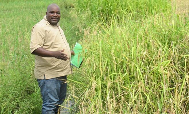 Tackling Rice Yellow Mottle Virus in Tanzania